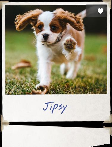Jipsy